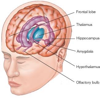 limbine-sistema.jpg